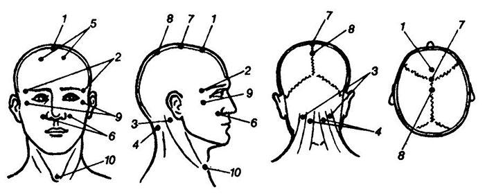 Расположении акупрессурных точек на голове