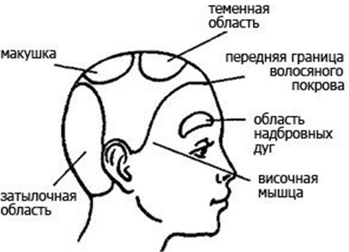 Месторасположение зон головы для массажа