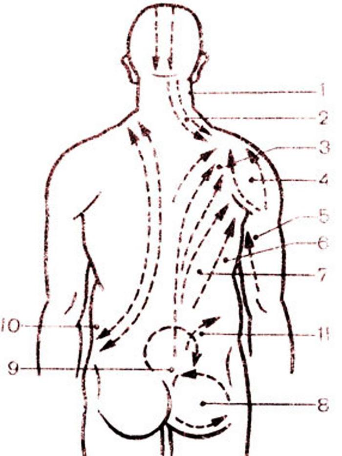 Схема массажных линии спины