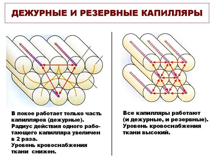 Дежурные и резервные капилляры