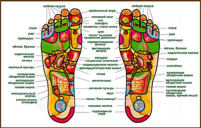 Проекция внутренних органов на стопах