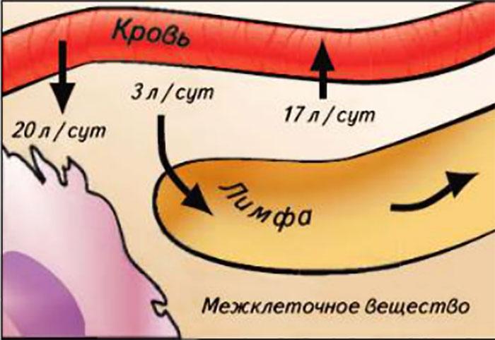 Движение жидкостей в организме