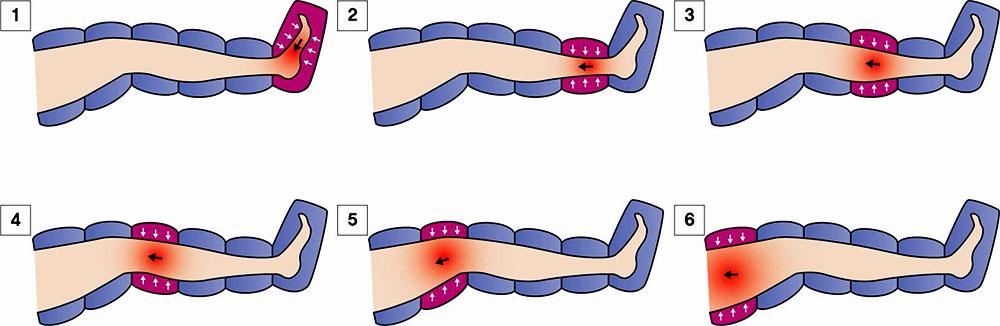 Мышечные сокращения