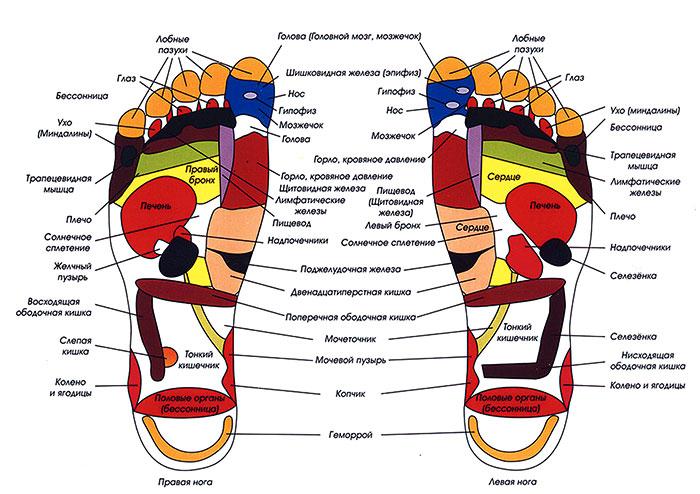 Зоны на ступнях связанные с внутренними органами