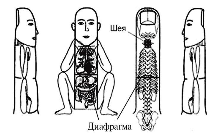 Соответствие зон пальца телу человека