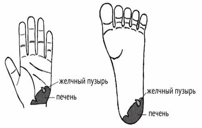 Зоны массажа при дисфункциях печени